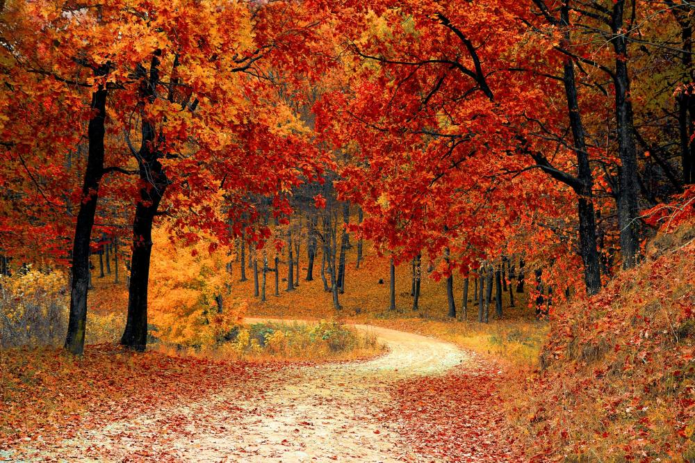 forest filled with autumn leaves
